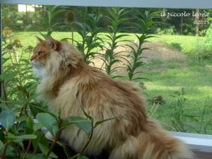 Leo jungle cat 1