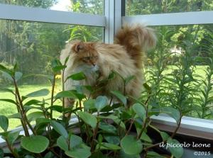 Leo jungle cat 2